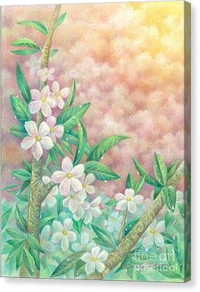 Cherryblossoms Canvas Print by Charity Goodwin