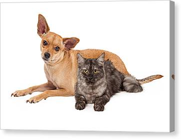 Chihuahua Dog And Gray Cat Canvas Print by Susan Schmitz