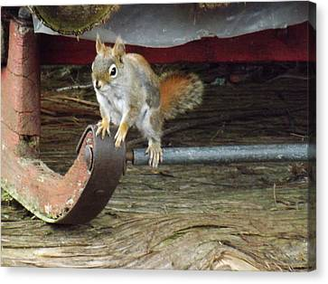 Chipmunk Hitch Hiker Canvas Print by Brenda Brown
