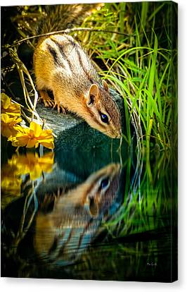 Chipmunk Reflection Canvas Print by Bob Orsillo