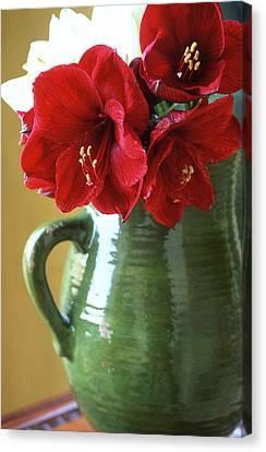 Christmas Amaryllis Canvas Print by Kathy Yates