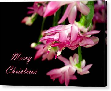 Christmas Cactus Greeting Card Canvas Print by Carolyn Marshall