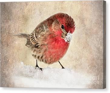 Christmas Card 9 Canvas Print by Betty LaRue