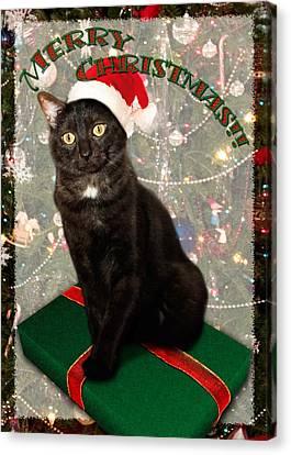 Christmas Cat Canvas Print by Adam Romanowicz