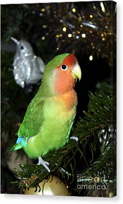 Christmas Pickle Canvas Print by Terri Waters