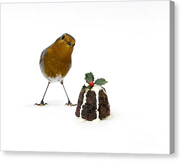 Christmas Robin Canvas Print by Tim Gainey