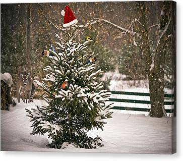 Christmas Tree. Canvas Print by Kelly Nelson