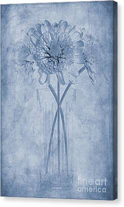 Chrysanthemum Cyanotype Canvas Print by John Edwards