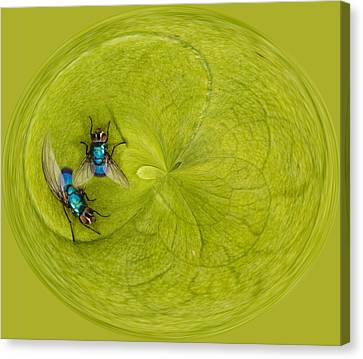 Circle Of Flies Canvas Print by Jean Noren