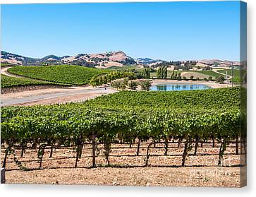 Classic Napa - Cuvaison Winery And Vineyard In Napa Valley. Canvas Print by Jamie Pham
