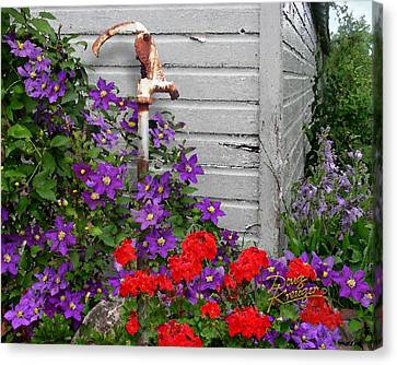 Clematis Cascade Canvas Print by Doug Kreuger