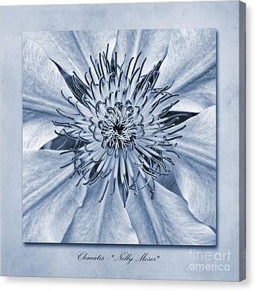Clematis Nelly Moser Cyanotype Canvas Print by John Edwards