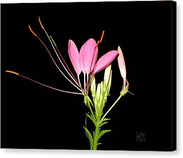 Cleome Canvas Print by J R Baldini Master Photographer