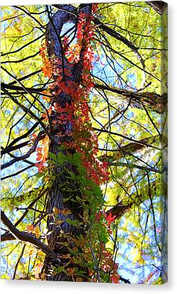 Climbing Red Canvas Print by Laurette Escobar