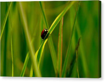 Climbing Up The Long Green Road Canvas Print by Jeff Swan