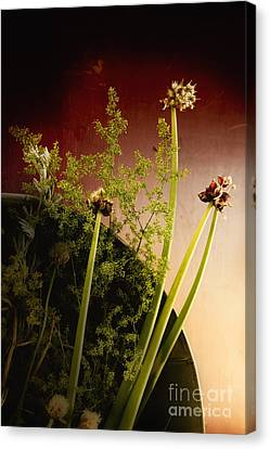 Clipped Stems Canvas Print by Margie Hurwich