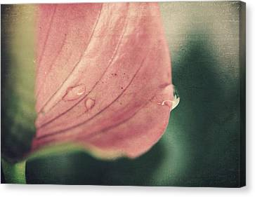 Close To Falling Canvas Print by Laurie Search