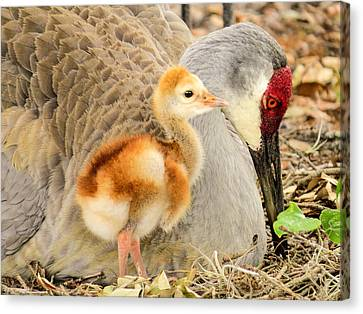 Close To Mother Canvas Print by Zina Stromberg