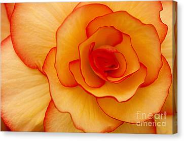 Close To Saturn Canvas Print by Anne Gilbert