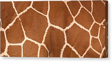 Close-up Of A Reticulated Giraffe Canvas Print by Panoramic Images