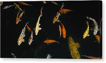 Close-up Of A School Of Fish In An Canvas Print by Panoramic Images