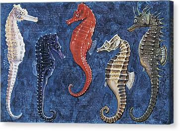 Close-up Of Five Seahorses Side By Side  Canvas Print by English School