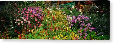 Close-up Of Flowers, Muren, Switzerland Canvas Print by Panoramic Images