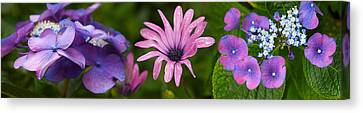 Close-up Of Purple Passion Flowers Canvas Print by Panoramic Images