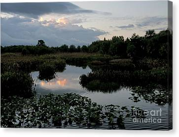 Clouds Over Green Cay Wetlands Canvas Print by Mark Newman