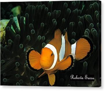 Clown Fish Canvas Print by Roberta Sassu