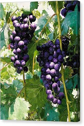 Clusters Of Red Wine Grapes Hanging On The Vine Canvas Print by Lanjee Chee