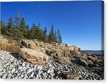 Coastal Acadia Canvas Print by John Greim