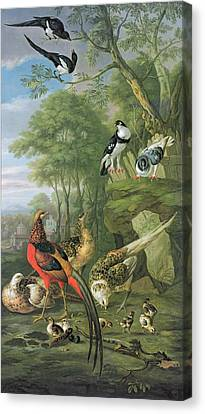 Cock Pheasant Hen Pheasant And Chicks And Other Birds In A Classical Landscape Canvas Print by Pieter Casteels