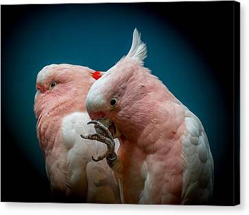 Cockatoos Canvas Print by Ernie Echols