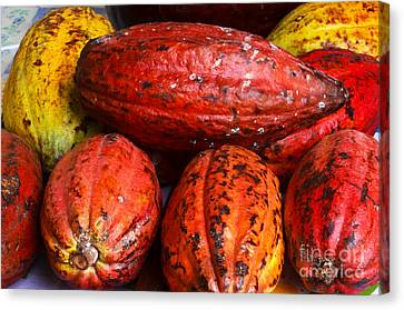 Cocoa Pods Canvas Print by Pravine Chester