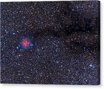 Cocoon Nebula Canvas Print by Tony & Daphne Hallas