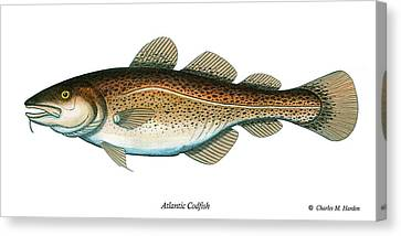 Codfish Canvas Print by Charles Harden