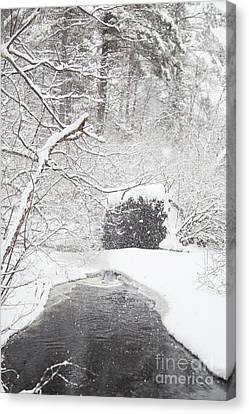 Cold Comfort Canvas Print by Sue OConnor