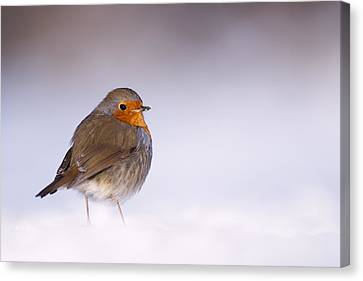 Cold Feet Canvas Print by Roeselien Raimond