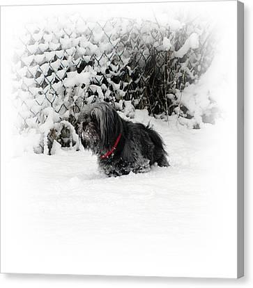 Cold Feet Canvas Print by Sharon Lisa Clarke