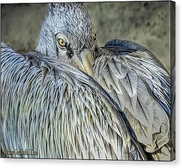 Cold Pink Backed Pelican Canvas Print by LeeAnn McLaneGoetz McLaneGoetzStudioLLCcom