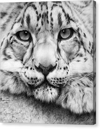 Cold Stare - Drawing Canvas Print by Natasha Denger