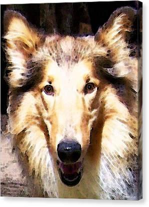 Collie Dog Art - Sunshine Canvas Print by Sharon Cummings