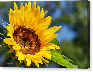 Color Me Happy Sunflower Canvas Print by Christina Rollo