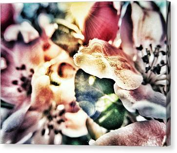 Color Me Pretty... Canvas Print by Marianna Mills
