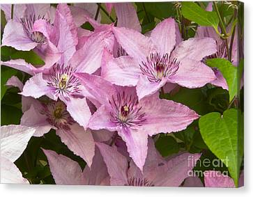 Color Of Pink Canvas Print by Timothy J Berndt