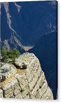Colorado River South Rim Cliff Overlook Grand Canyon National Park Vertical Canvas Print by Shawn O'Brien