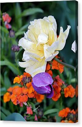 Colorful Flowers Canvas Print by Cynthia Guinn