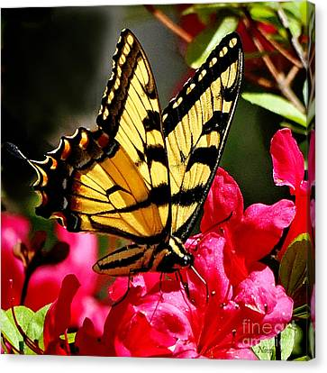 Colorful Flying Garden Canvas Print by Nava Thompson