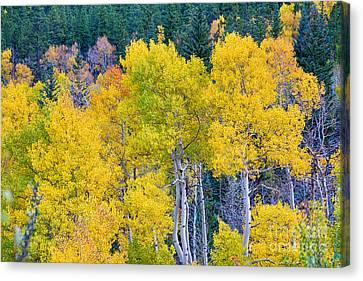 Colorful Forest Canvas Print by James BO  Insogna